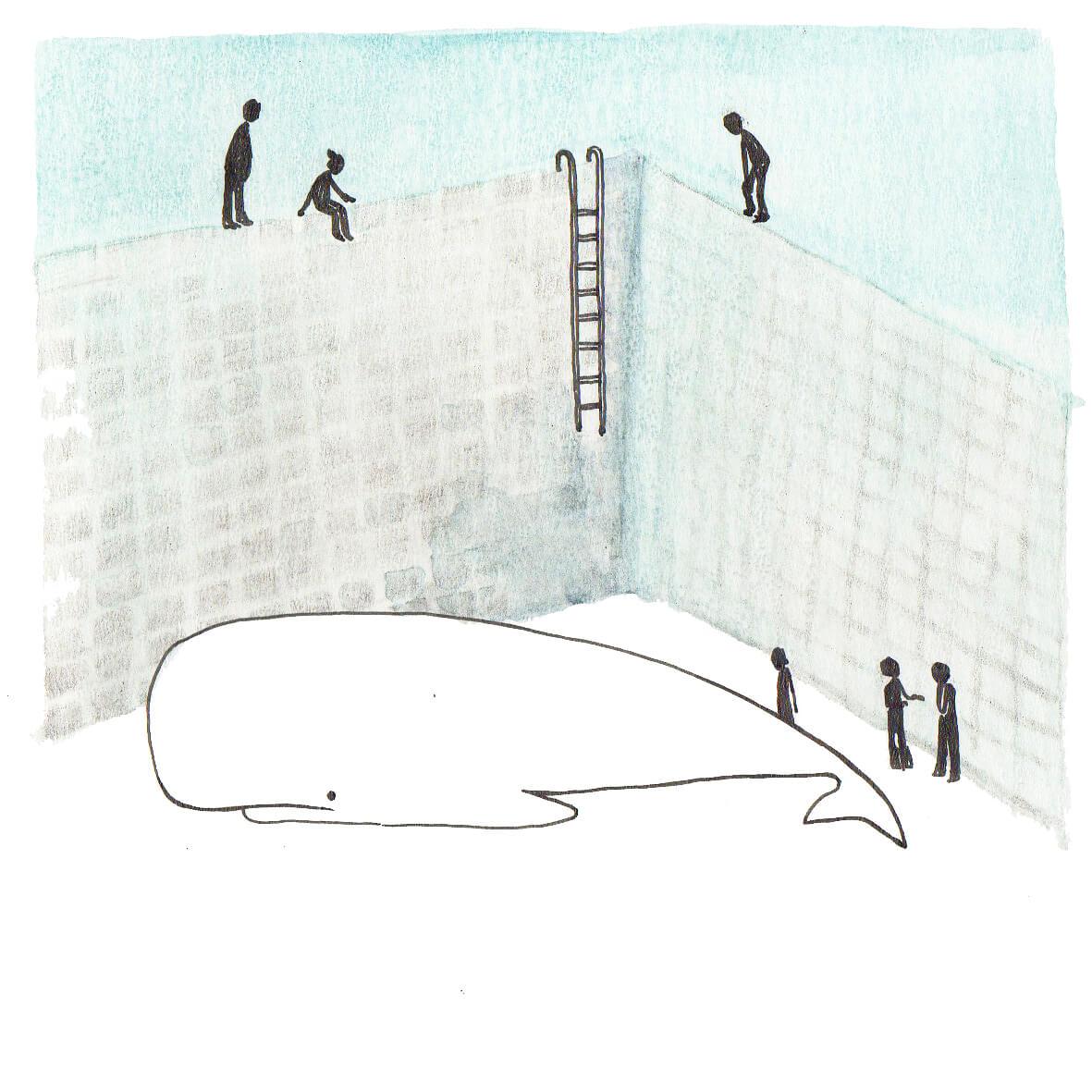 potvis in het zwembad | tekening door Cynthia Borst