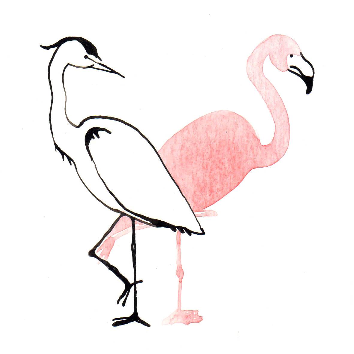 reiger en flamingo | tekening door Cynthia Borst