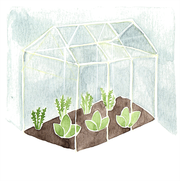 plantenkas | tekening door Cynthia Borst
