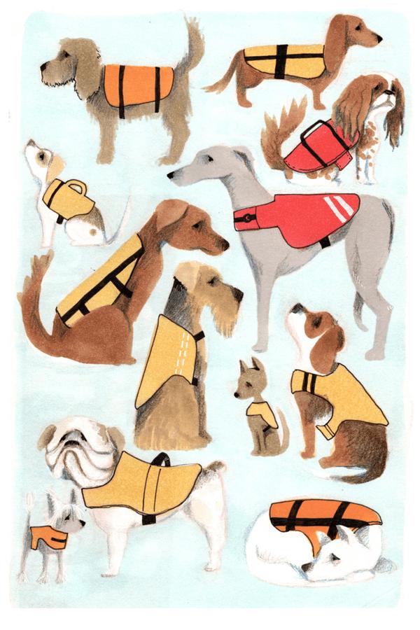 hondjes met zwemvest | tekening door Cynthia Borst